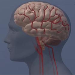 Studies reveal 4 factors in brain health
